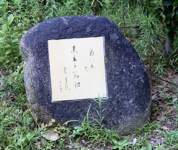 芭蕉句碑(生国魂神社境内) (2)