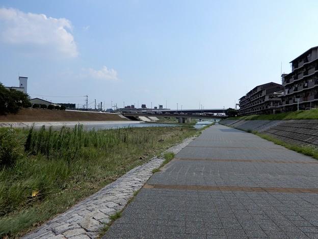 鴨川自転車道 (1)