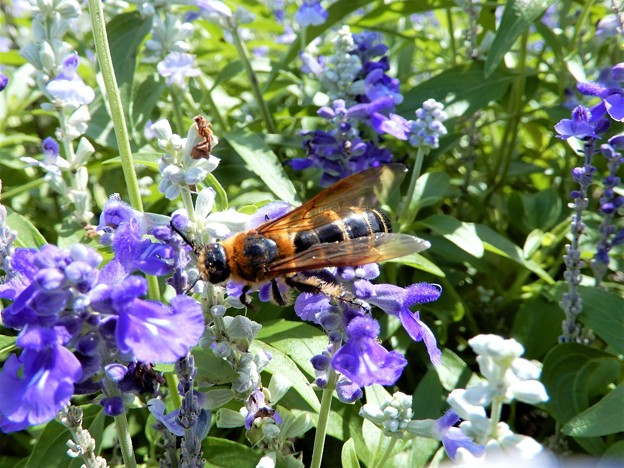 蜂 (1)