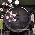 Photos: 桜SL
