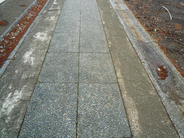 月読神社 洗い出しの参道