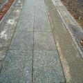 写真: 月読神社 洗い出しの参道