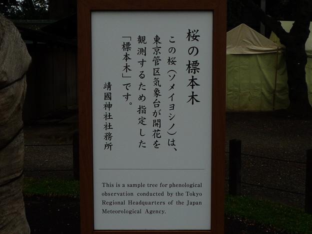 桜の開花宣言に用いる標本木