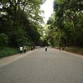 とても心地の良い明治神宮 参道