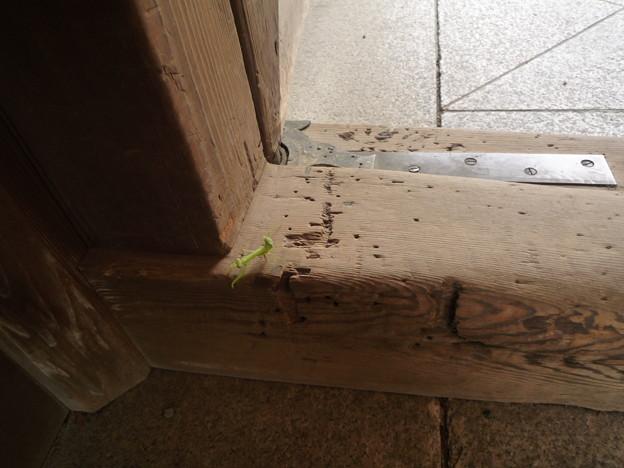 明治神宮 南神門の小さな蟷螂