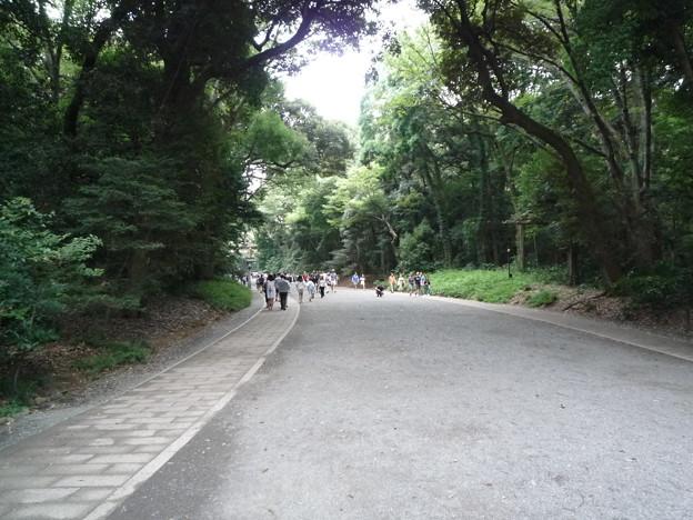 とても心地の良い緑豊かな明治神宮の参道