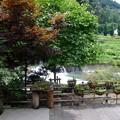 Photos: 小田川の畔にて