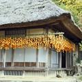 写真: 軒下の吊し柿