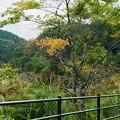 Photos: 秋を感じて~!