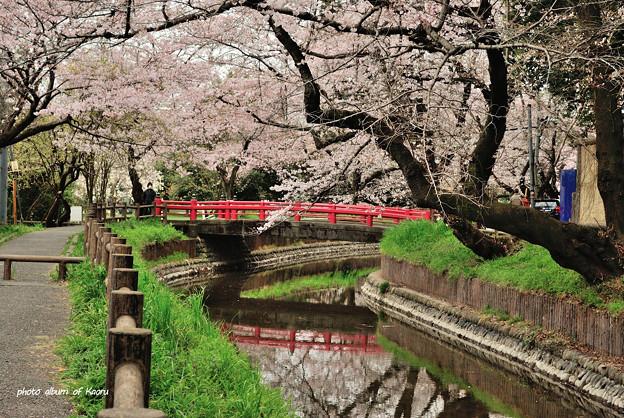 氷川女体神社の赤い橋
