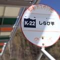 写真: しらび平バス停