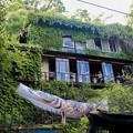 写真: 森のカフェ