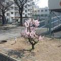 Photos: 徒花