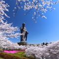 写真: 牛久大仏の春1