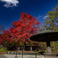 Photos: 深紅の秋