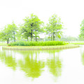Photos: 梅雨景色