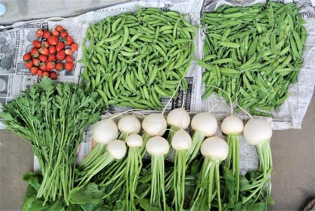 エンドウ豆収穫(今季合計16kg)