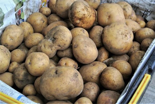 インカのめざめ収穫(10kg)