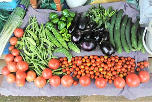 第7回目の夏野菜収獲全量【葉物を除く】