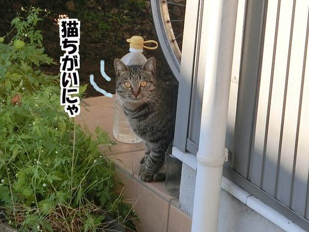 新顔のノラ猫ちゃん