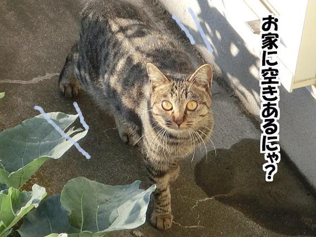 家猫になれますか?