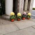 Photos: 笠間稲荷神社東京別社05