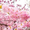Photos: _DSC4609