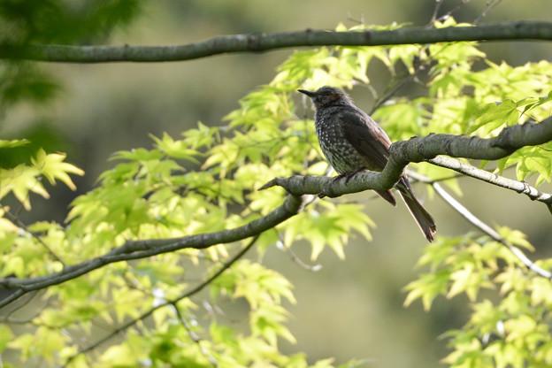 愛すべき身近な野鳥達2