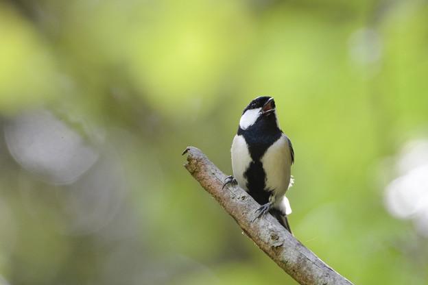 愛すべき身近な野鳥達3