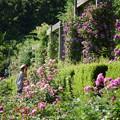 写真: 花フェスタ公園