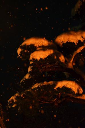 160115浄火に照らされる松