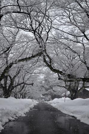 160206雪の降る景色03