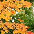 秋の先取り