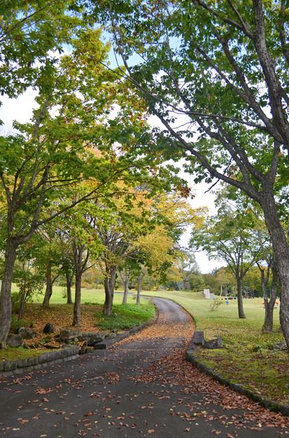 紅葉前の遊歩道