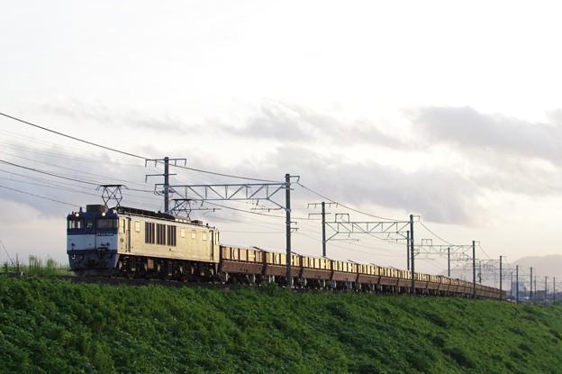 Photos: 赤ホキ IMGP5378