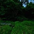 Photos: ほたる1 (2)