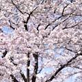 Photos: 春なり~