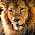 Photos: ライオンさん