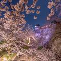 写真: 2018鶴山公園
