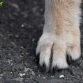 写真: 誰の足?