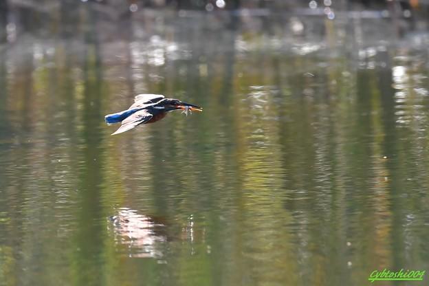 写真: 大漁飛行2