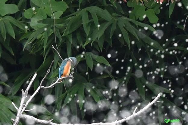 Photos: 翡翠の夢