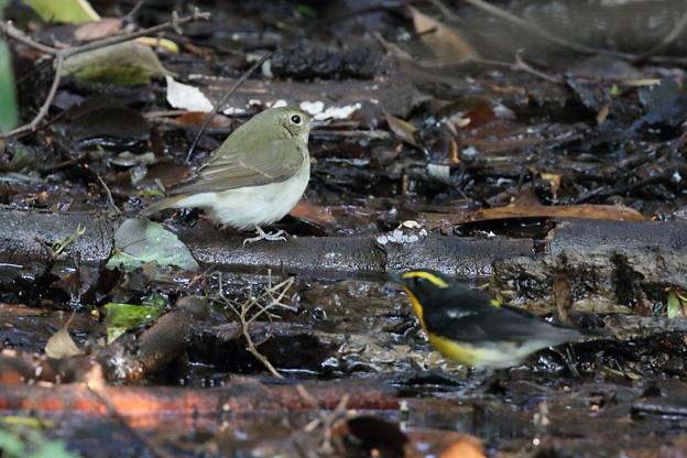 水浴びする小鳥たち11