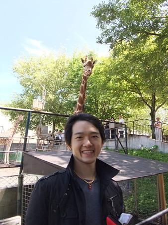 LeionGiraffe1 (1)