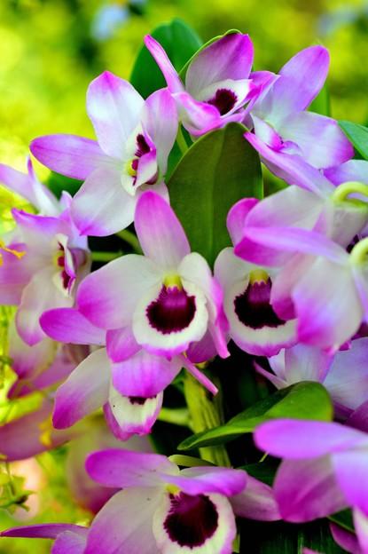 Photos: 紫の風