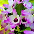写真: 紫の風
