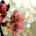 写真: 開花