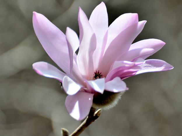 ここに咲く花