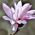 写真: ここに咲く花
