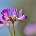 写真: 野にも春